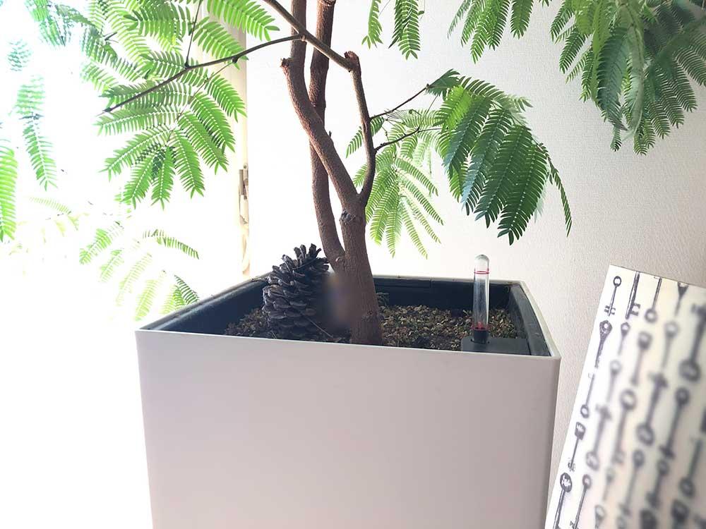 観葉植物 水やり自動調整 レチューザの鉢がおすすめ♪